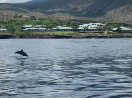 a dolphin mid-jump